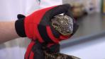 Odnaleziono właściciela anakondy
