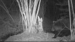 Śmierć mieszkańca Olszanicy nie była spowodowana przez niedźwiedzia