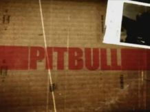Pitbull, seriale (fot. TVP)