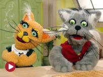 Wasze ulubione koty - Budzik i Ruda