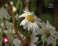 Kwiaty i ogrody odc. 23.05.2014