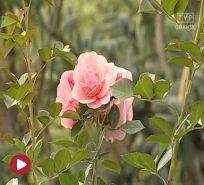 Kwiaty i ogrody
