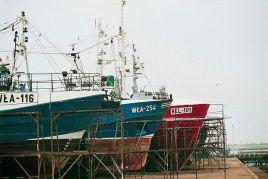 Od teraz polscy rybacy mają zakaz połowu śledzi na Bałtyku