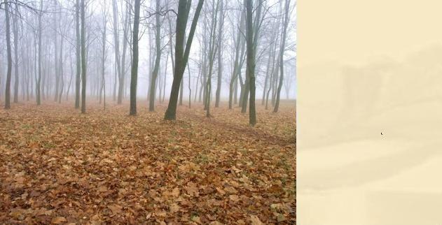 Rano zamglenia i mgły, lokalnie możliwy słaby deszcz. (fot. sxc.hu/vimark).