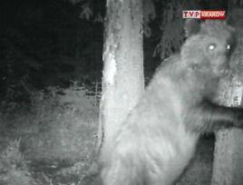Fotopułapka to rodzaj monitoringu zwierząt.