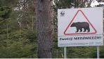 To nie niedźwiedź zabił mieszkańca Olszanicy