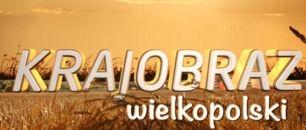 Krajobraz Wielkopolski (c)